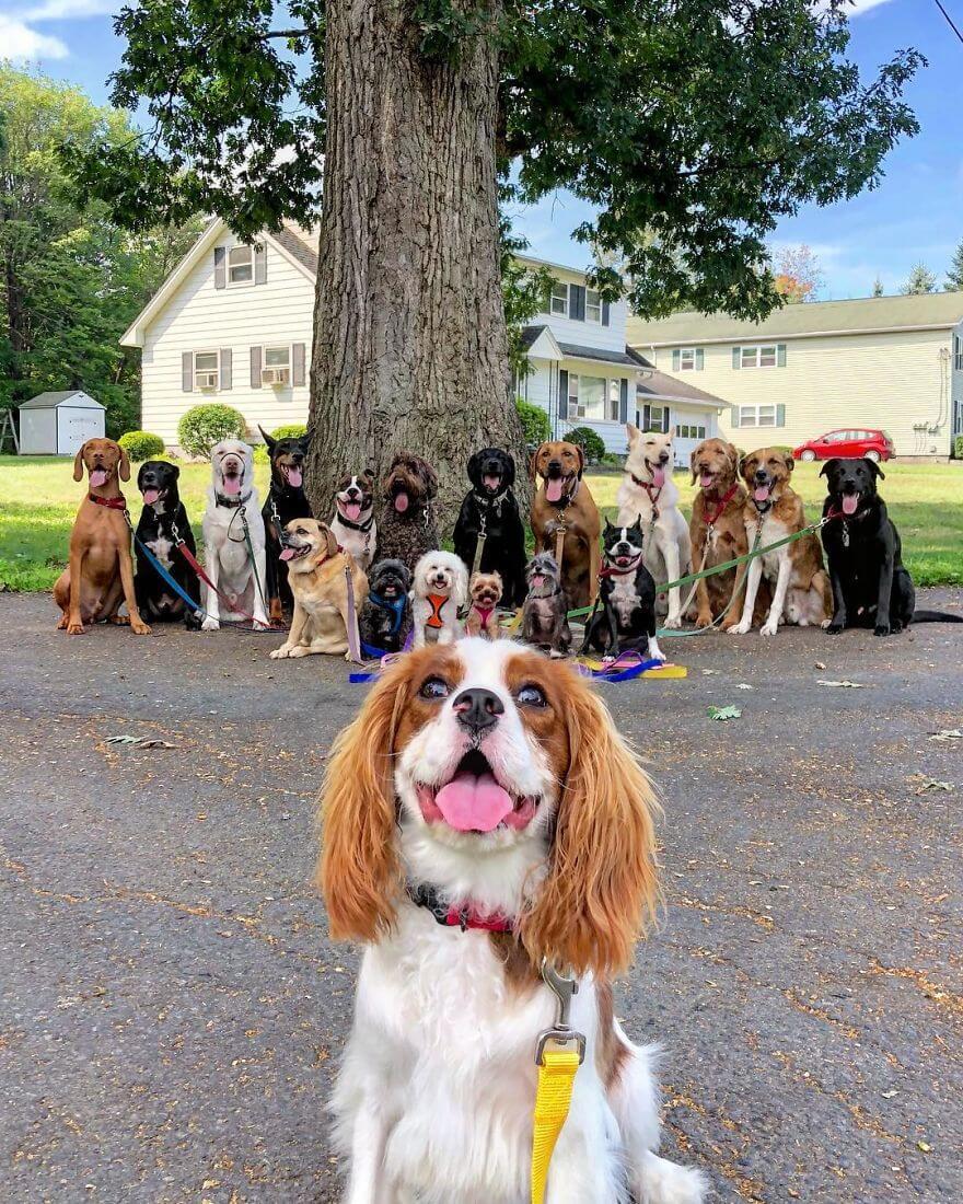 10 - Esses cachorros caminham juntos e tiram uma foto juntos todos os dias