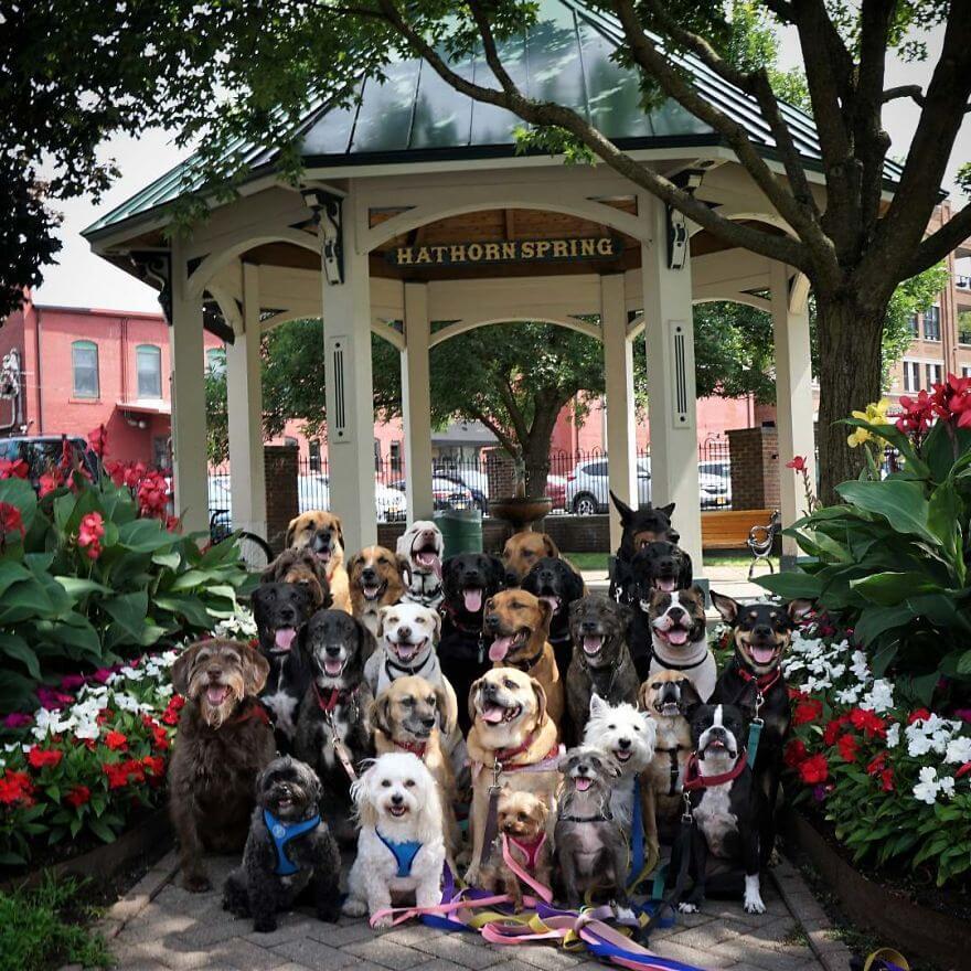 11 - Esses cachorros caminham juntos e tiram uma foto juntos todos os dias