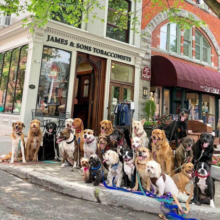 12 - Esses cachorros caminham juntos e tiram uma foto juntos todos os dias
