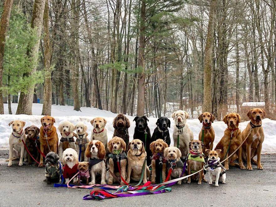 13 - Esses cachorros caminham juntos e tiram uma foto juntos todos os dias
