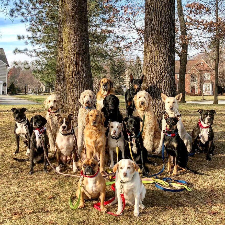 14 - Esses cachorros caminham juntos e tiram uma foto juntos todos os dias