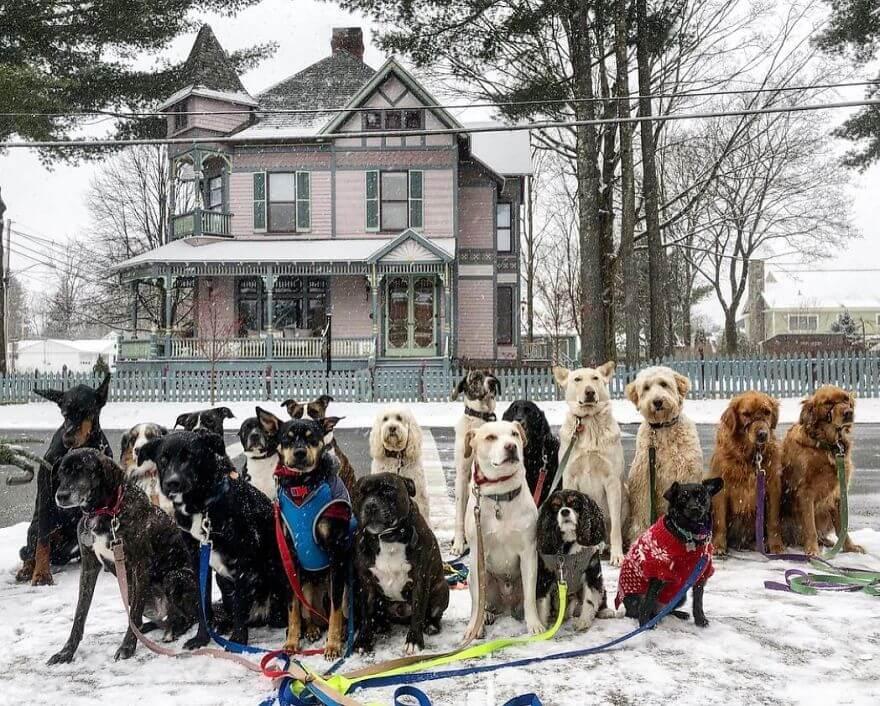 15 - Esses cachorros caminham juntos e tiram uma foto juntos todos os dias