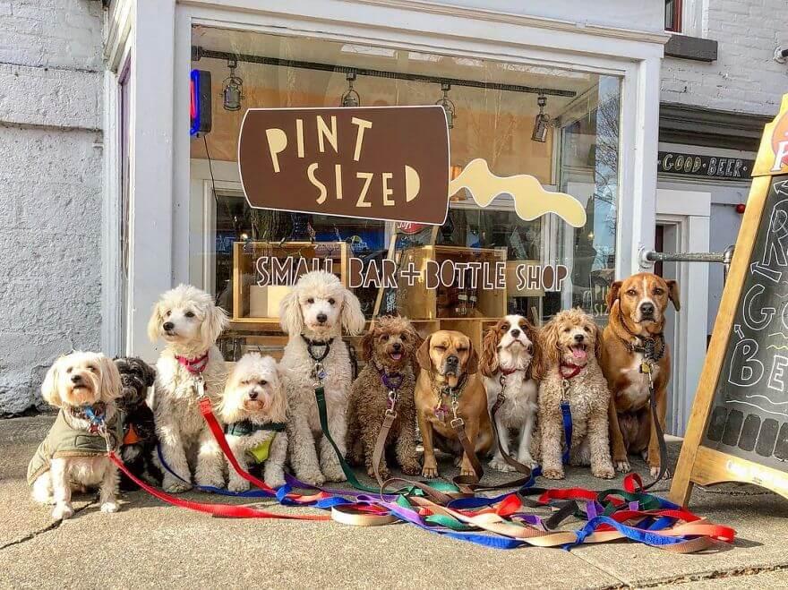 5 - Esses cachorros caminham juntos e tiram uma foto juntos todos os dias