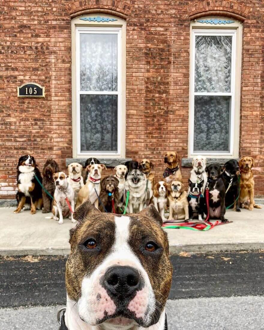 7 - Esses cachorros caminham juntos e tiram uma foto juntos todos os dias