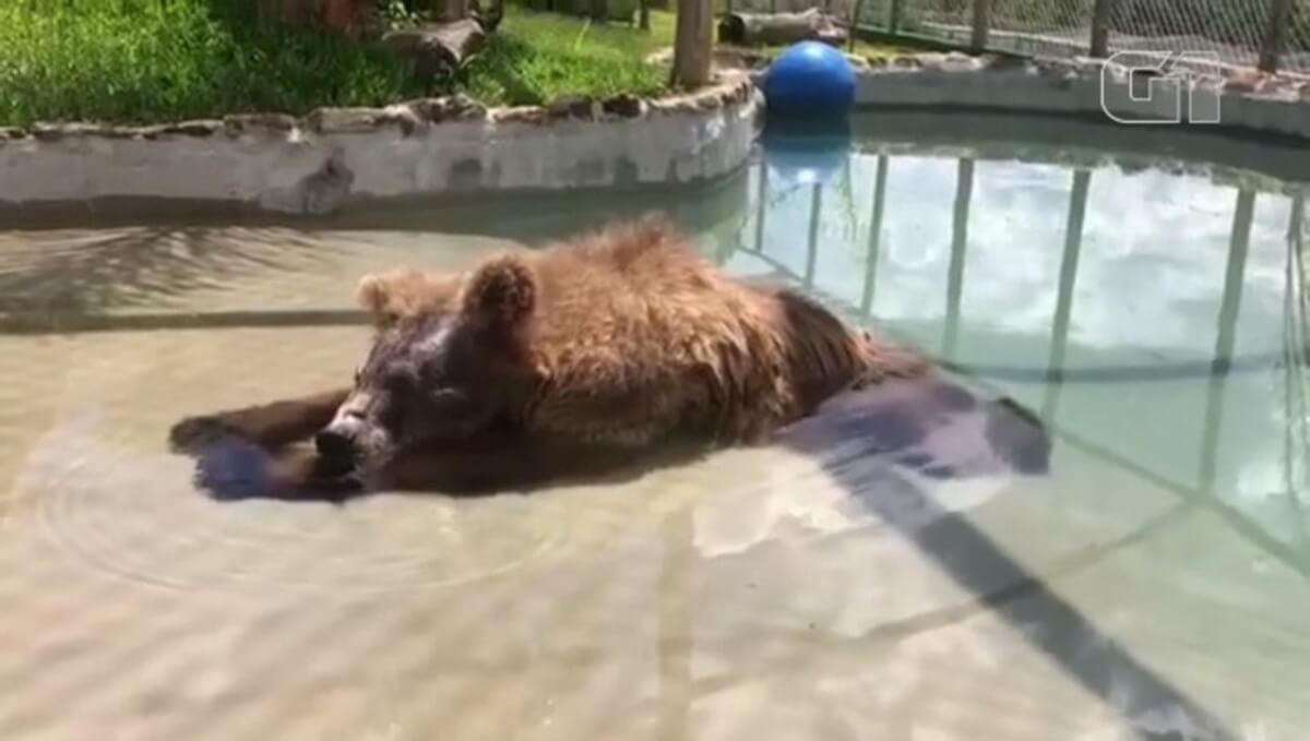 7319704 x720 - Confira a belíssima transformação da ursa Rowena, ela chegou ao santuário de SP após sofrer maus tratos