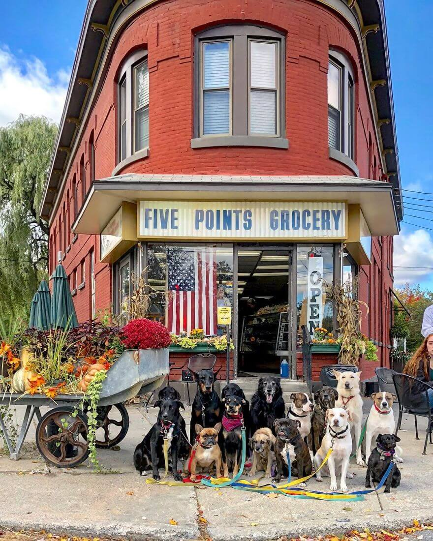 8 - Esses cachorros caminham juntos e tiram uma foto juntos todos os dias