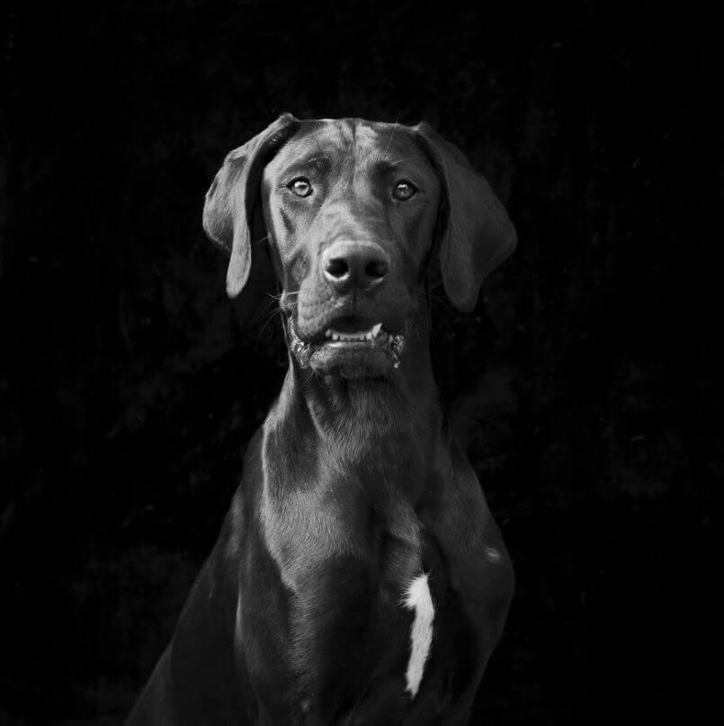 102 - Eles são lindos sim! Cães e gatos pretos posam para fotos para incentivar adoção