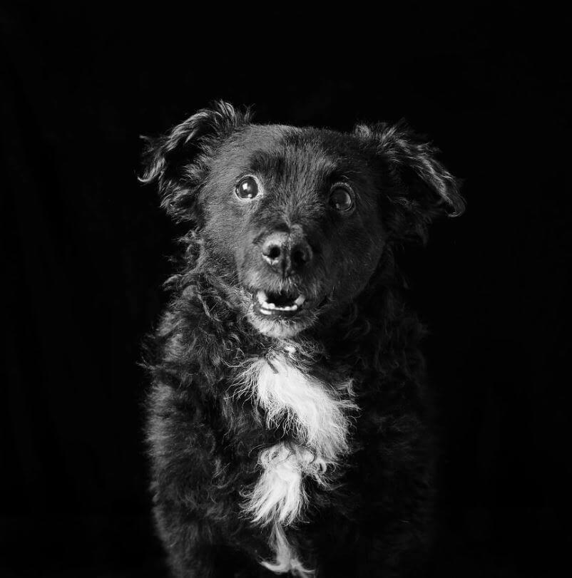 122 - Eles são lindos sim! Cães e gatos pretos posam para fotos para incentivar adoção