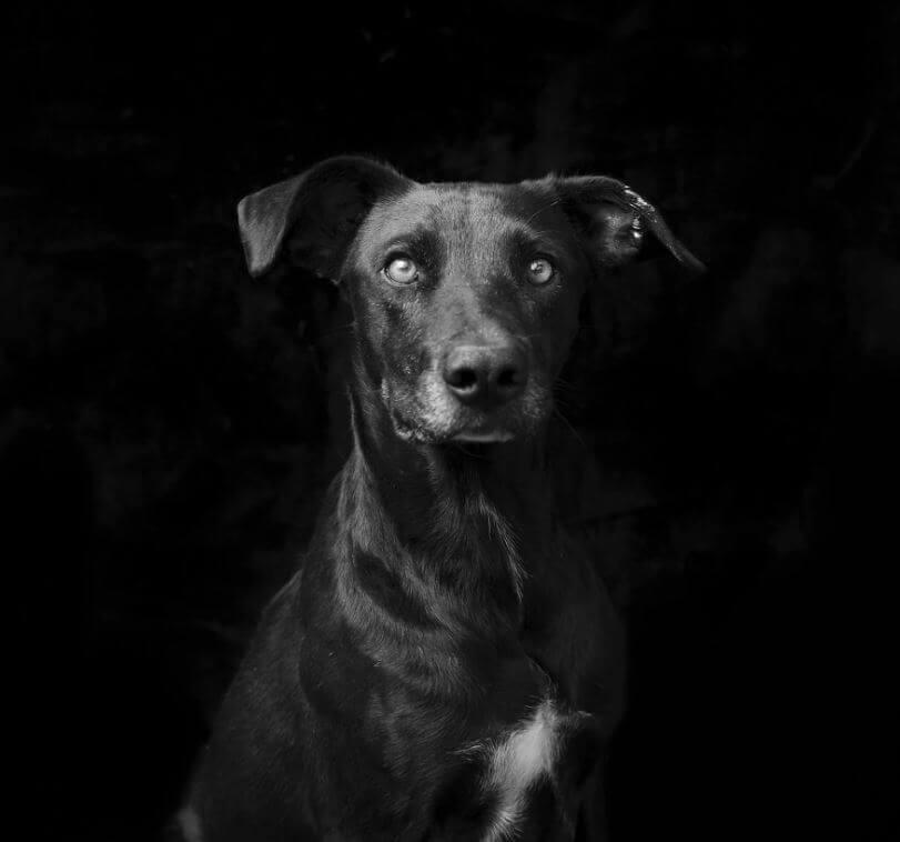 142 - Eles são lindos sim! Cães e gatos pretos posam para fotos para incentivar adoção