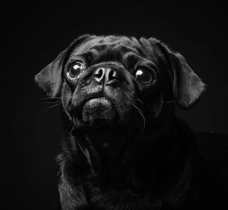 161 - Eles são lindos sim! Cães e gatos pretos posam para fotos para incentivar adoção