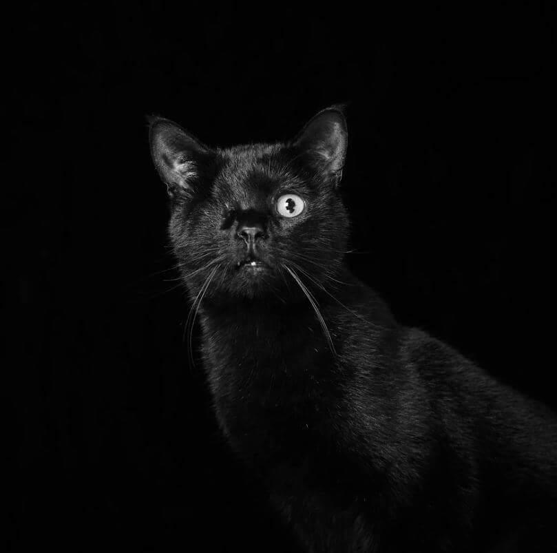 18 - Eles são lindos sim! Cães e gatos pretos posam para fotos para incentivar adoção