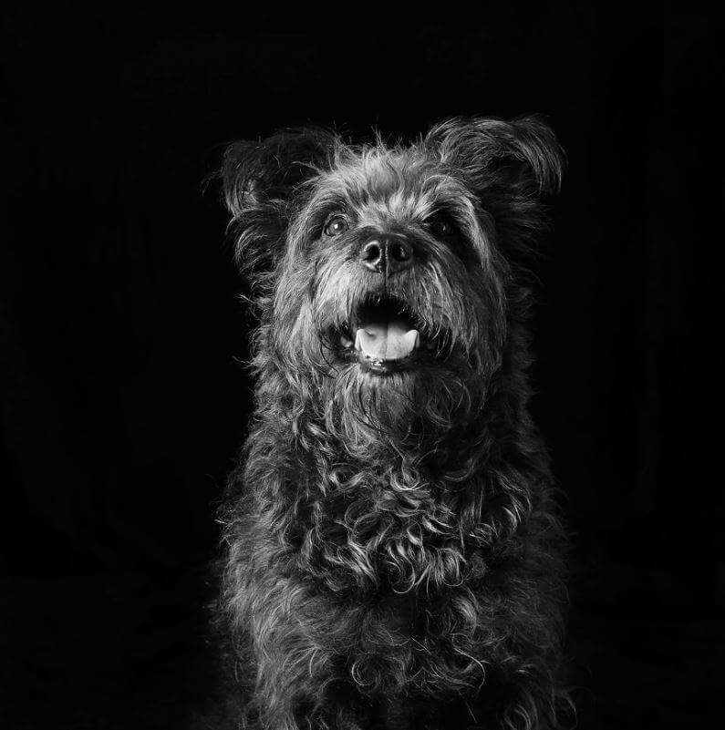 181 - Eles são lindos sim! Cães e gatos pretos posam para fotos para incentivar adoção