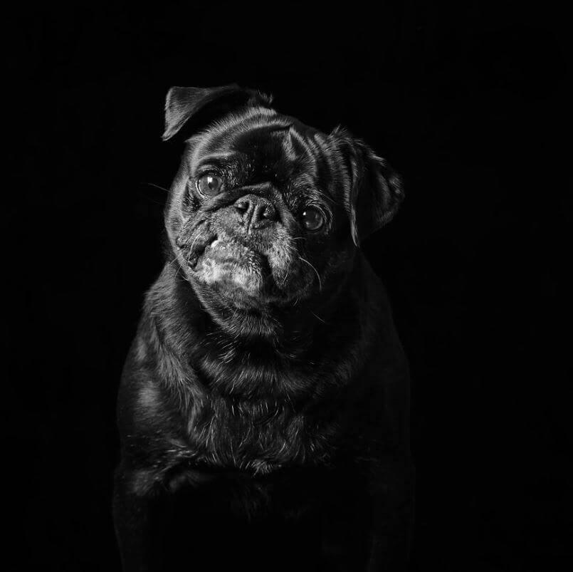 19 - Eles são lindos sim! Cães e gatos pretos posam para fotos para incentivar adoção