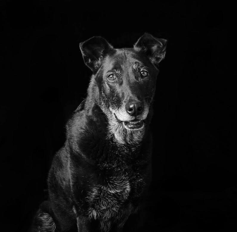 20 - Eles são lindos sim! Cães e gatos pretos posam para fotos para incentivar adoção