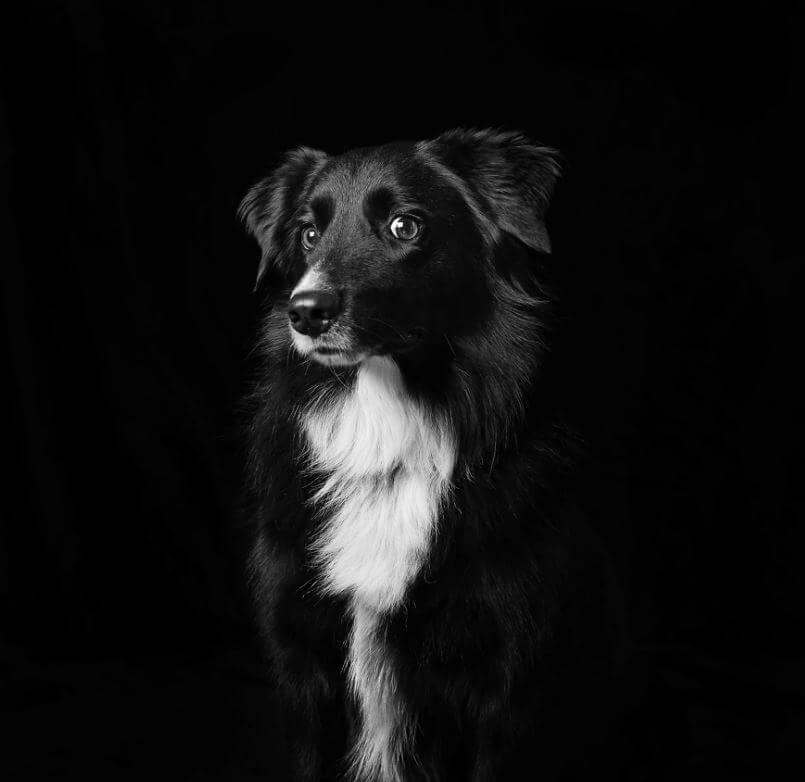 27 - Eles são lindos sim! Cães e gatos pretos posam para fotos para incentivar adoção
