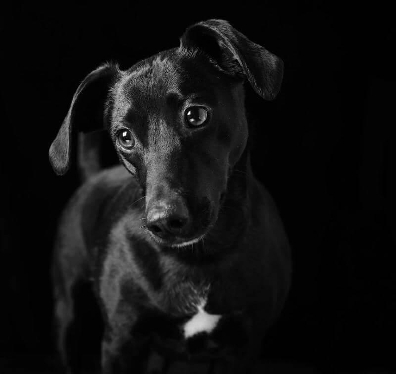 36 - Eles são lindos sim! Cães e gatos pretos posam para fotos para incentivar adoção