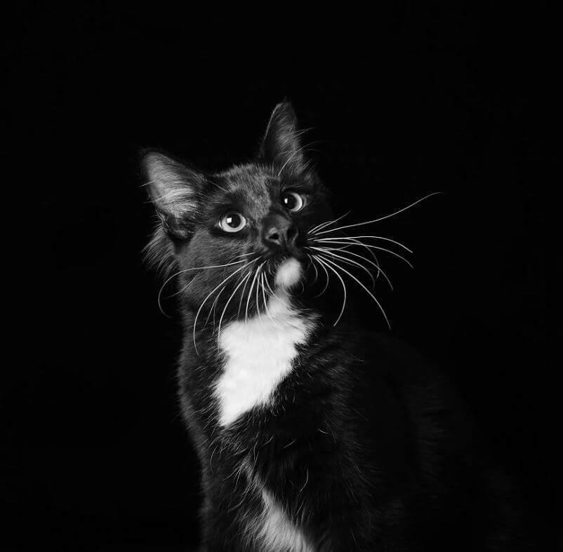 45 - Eles são lindos sim! Cães e gatos pretos posam para fotos para incentivar adoção