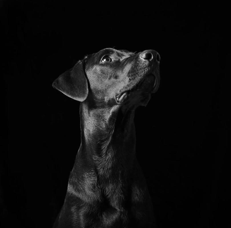 64 - Eles são lindos sim! Cães e gatos pretos posam para fotos para incentivar adoção