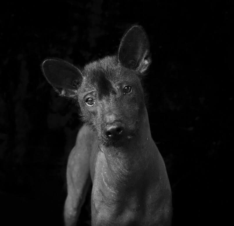 84 - Eles são lindos sim! Cães e gatos pretos posam para fotos para incentivar adoção