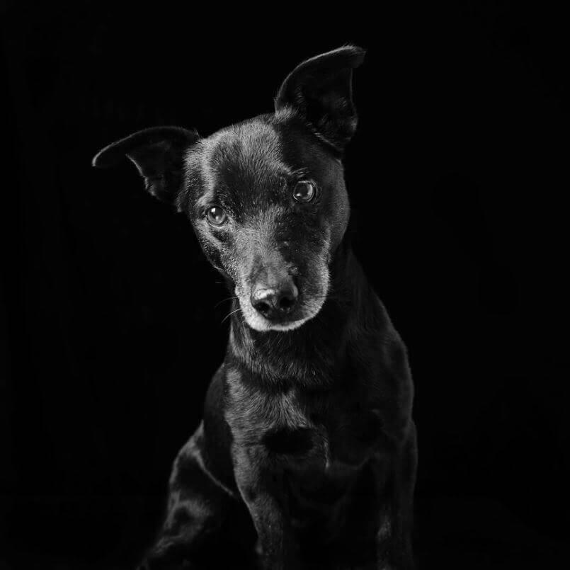 93 - Eles são lindos sim! Cães e gatos pretos posam para fotos para incentivar adoção