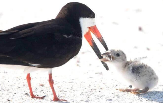 bird11 - Foto registra ave alimentando filhote com cigarro