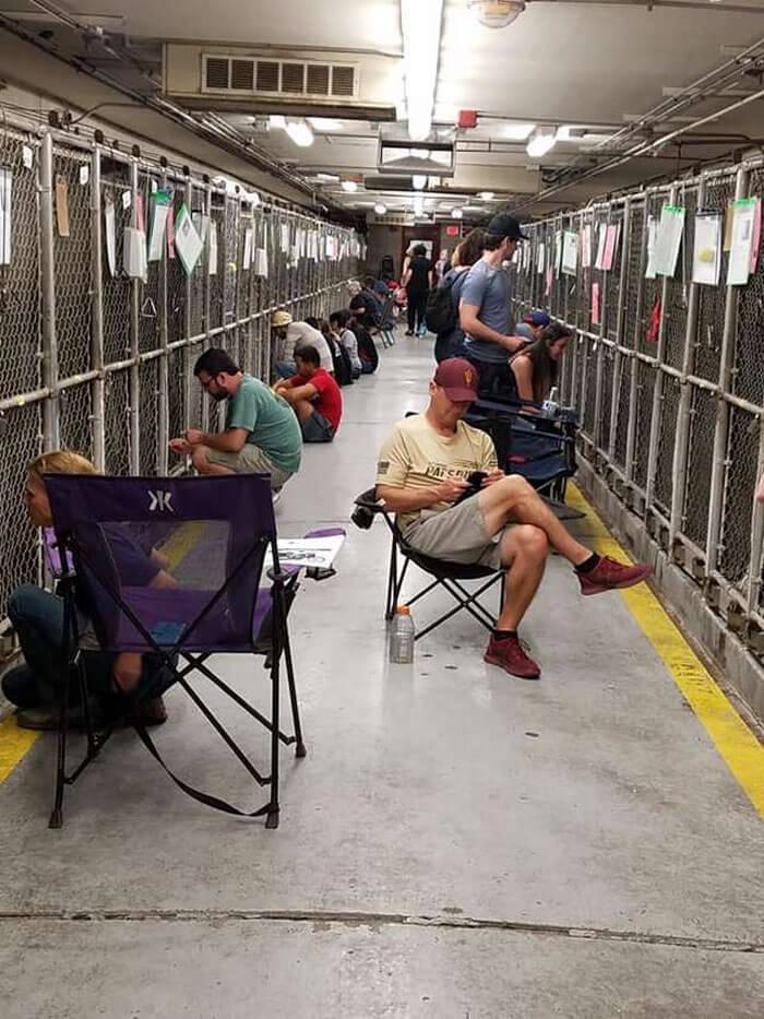 fireworks 2 5d1da3ad4da14 700 - As pessoas deixaram de comemorar o 4 de Julho nos Estados Unidos para confortar animais em abrigos