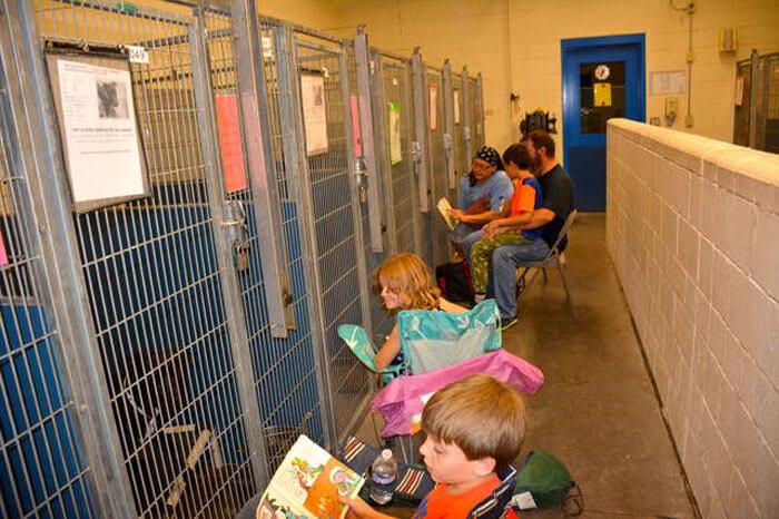 fireworks 3 5d1da3af24e1b 700 - As pessoas deixaram de comemorar o 4 de Julho nos Estados Unidos para confortar animais em abrigos