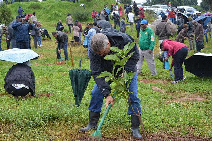 350 million trees planted record green legacy ethiopia 1 5d41517494324 700 - Etiópia quebra recorde mundial plantando 350 milhões de mudas em 12 horas