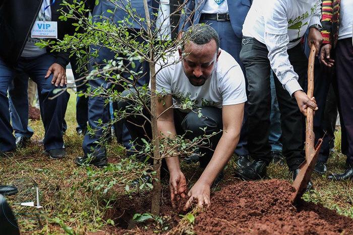 350 million trees planted record green legacy ethiopia 5d41550b99692 700 - Etiópia quebra recorde mundial plantando 350 milhões de mudas em 12 horas