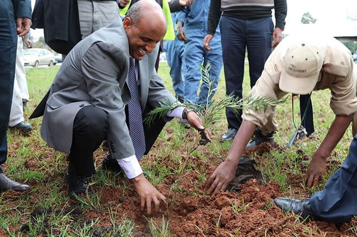 350 million trees planted record green legacy ethiopia 5d415871cd371 700 - Etiópia quebra recorde mundial plantando 350 milhões de mudas em 12 horas