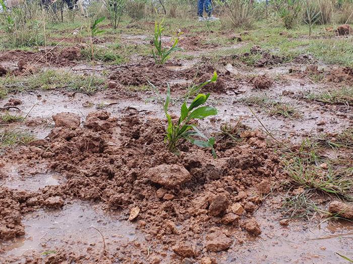 350 million trees planted record green legacy ethiopia 5d415a6ee83fe 700 - Etiópia quebra recorde mundial plantando 350 milhões de mudas em 12 horas