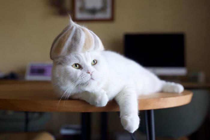 BlLZTV0l1x2 png 700 - Dono de gatos cria solução para pelos caídos e a transforma em hobby