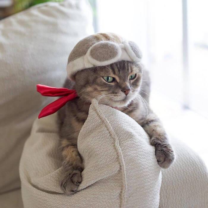 BntOb6WleF9 png 700 - Dono de gatos cria solução para pelos caídos e a transforma em hobby