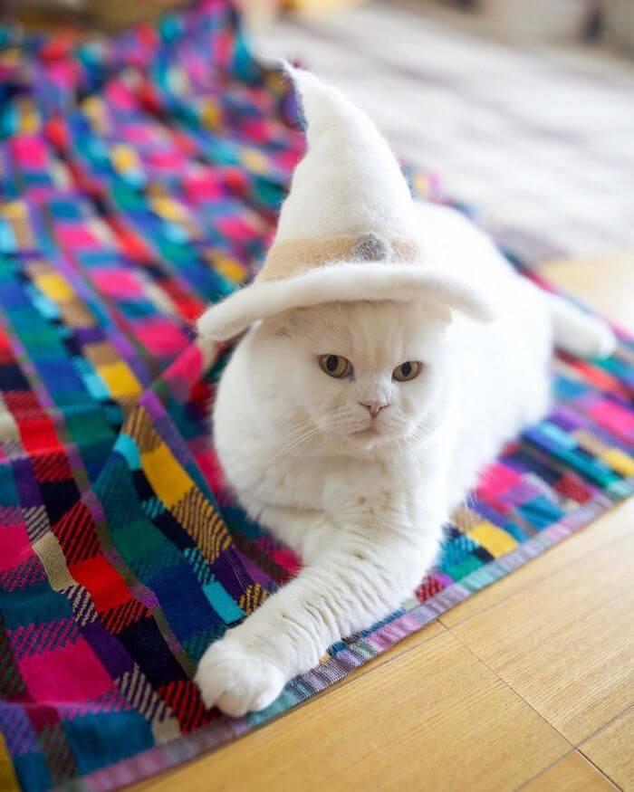 BpZeboBFLsm png 700 - Dono de gatos cria solução para pelos caídos e a transforma em hobby