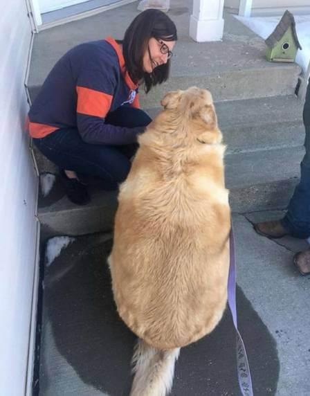 Kai2 - Dono de cão obeso pede para que ele seja sacrificado mas veterinário decide salvar sua vida