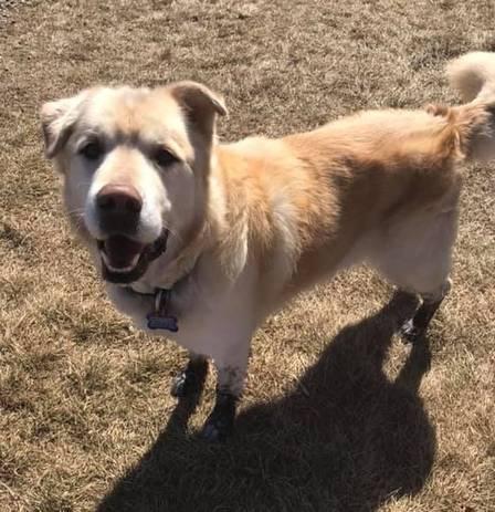 Kai4 - Dono de cão obeso pede para que ele seja sacrificado mas veterinário decide salvar sua vida