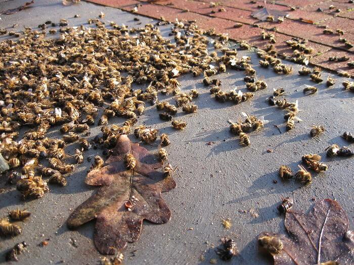 abelhas - 500 milhões de abelhas morrem no Brasil em três meses e a nossa alimentação está em perigo