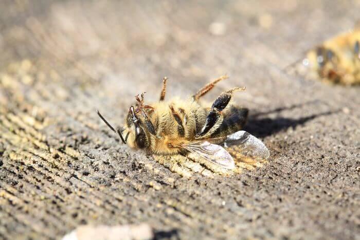 abelhas2 - 500 milhões de abelhas morrem no Brasil em três meses e a nossa alimentação está em perigo