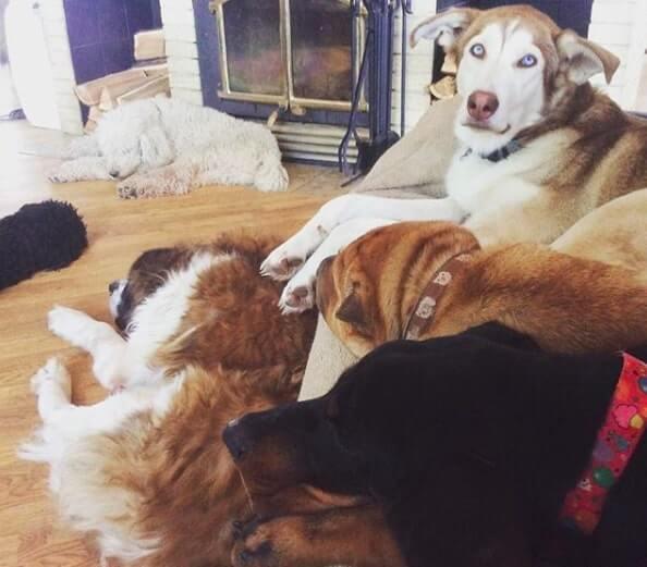 """casaladota3 - Casal ao adotar 45 cães """"indesejados"""" permite que eles corram livres pela primeira vez"""