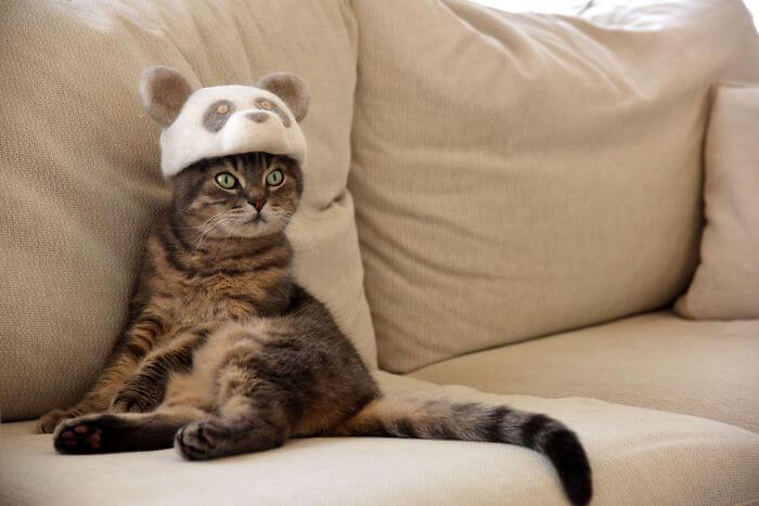 cat hat 1 960x6402x 5d53d110bfa62 700 - Dono de gatos cria solução para pelos caídos e a transforma em hobby