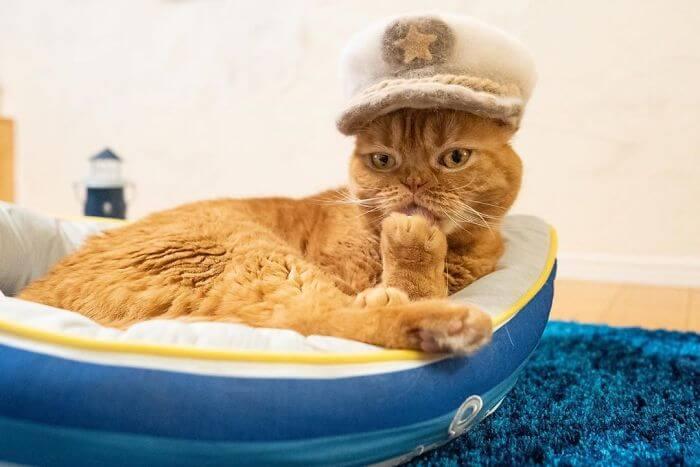 cat hat 6 5d53d11a85301 700 - Dono de gatos cria solução para pelos caídos e a transforma em hobby