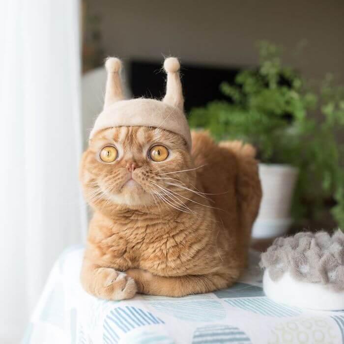 cat hat 8 5d53d11e96b04 700 - Dono de gatos cria solução para pelos caídos e a transforma em hobby