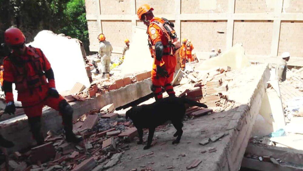 frame 00 00 51.572 - Filhotes de cadela que ajudou no desastre de Mariana são o novo reforço dos Bombeiros de MG