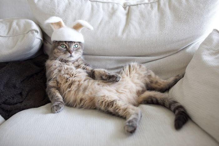 hair cat hats ryo yamazaki 1 5d53d1238f62a 700 - Dono de gatos cria solução para pelos caídos e a transforma em hobby