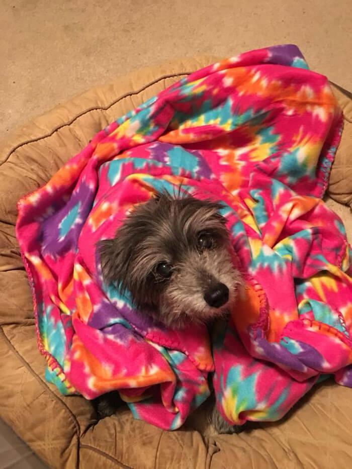 woman adopts childhood dog without knowing nicole grimes 7 5d7a51b5c8136 700 - Ao adotar cadela já adulta Nicole descobre que era sua melhor amiga de infância