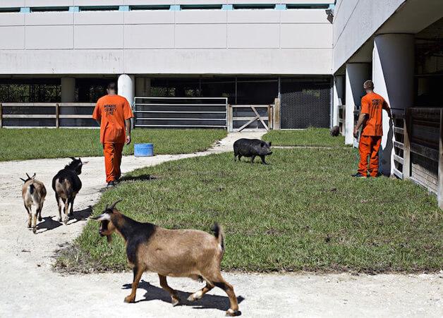 FAZENDA2 - Detentos cuidam de animais abandonados e ambos ganham uma nova chance