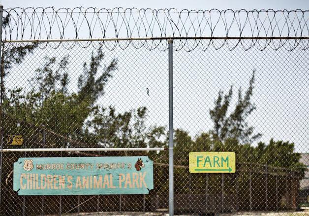 FAZENDA3 - Detentos cuidam de animais abandonados e ambos ganham uma nova chance