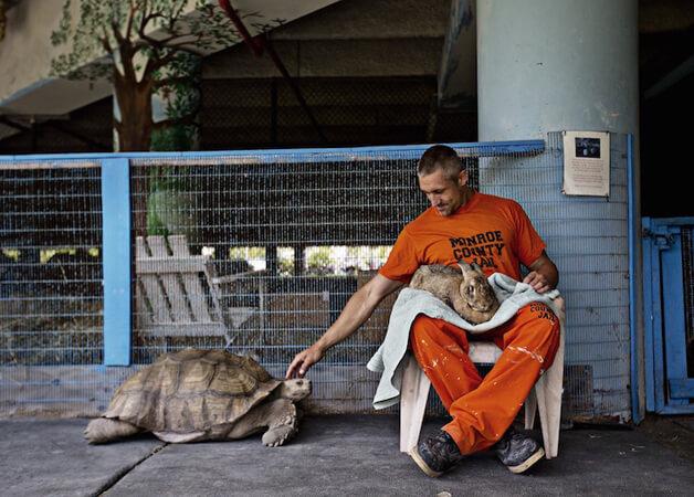 FAZENDA5 - Detentos cuidam de animais abandonados e ambos ganham uma nova chance