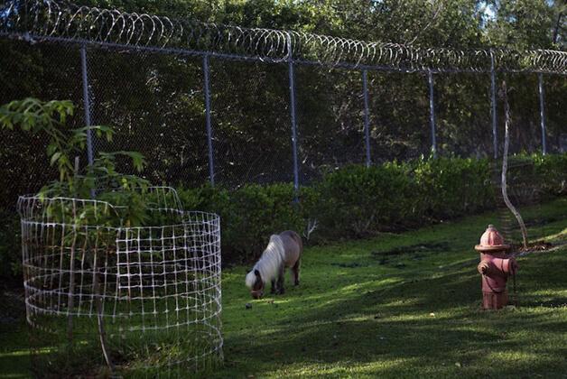 FAZENDA6 - Detentos cuidam de animais abandonados e ambos ganham uma nova chance