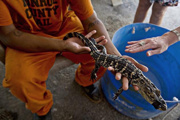 FAZENDA7 - Detentos cuidam de animais abandonados e ambos ganham uma nova chance